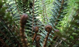 Fern close up image in Hinewai Reserve