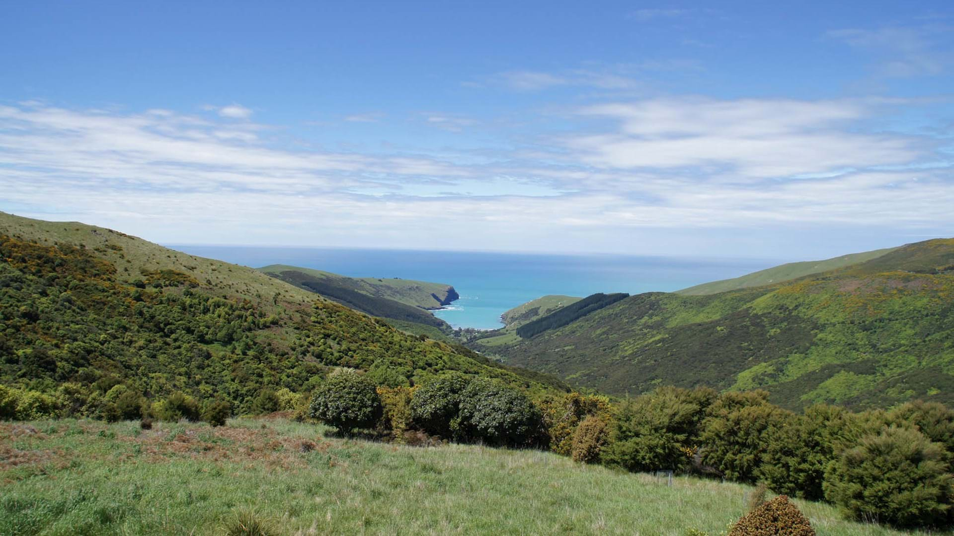 Hinewai Reserve on Banks Peninsula