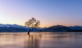 The Wanaka Lonely tree